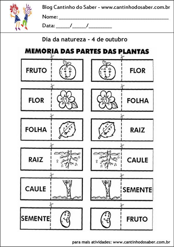 atividades para o dia da natureza memoria das plantas